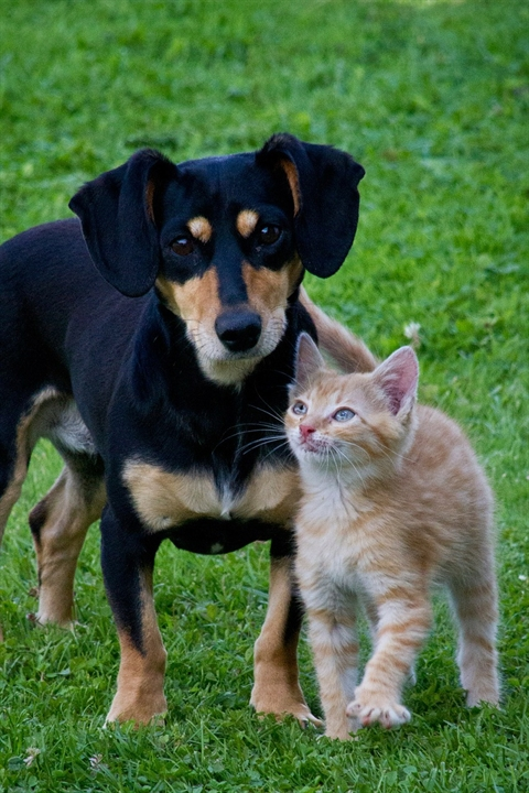 dog and cat standing together